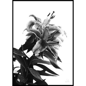 BLACK AND WHITE FLOWER – Poster 50×70 cm