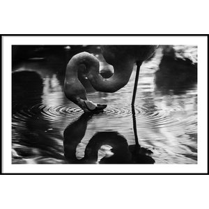 FLAMINGO REFLECTION – Poster 50×70 cm